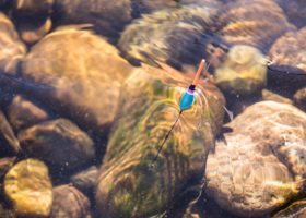 pêche bouchon Dordogne